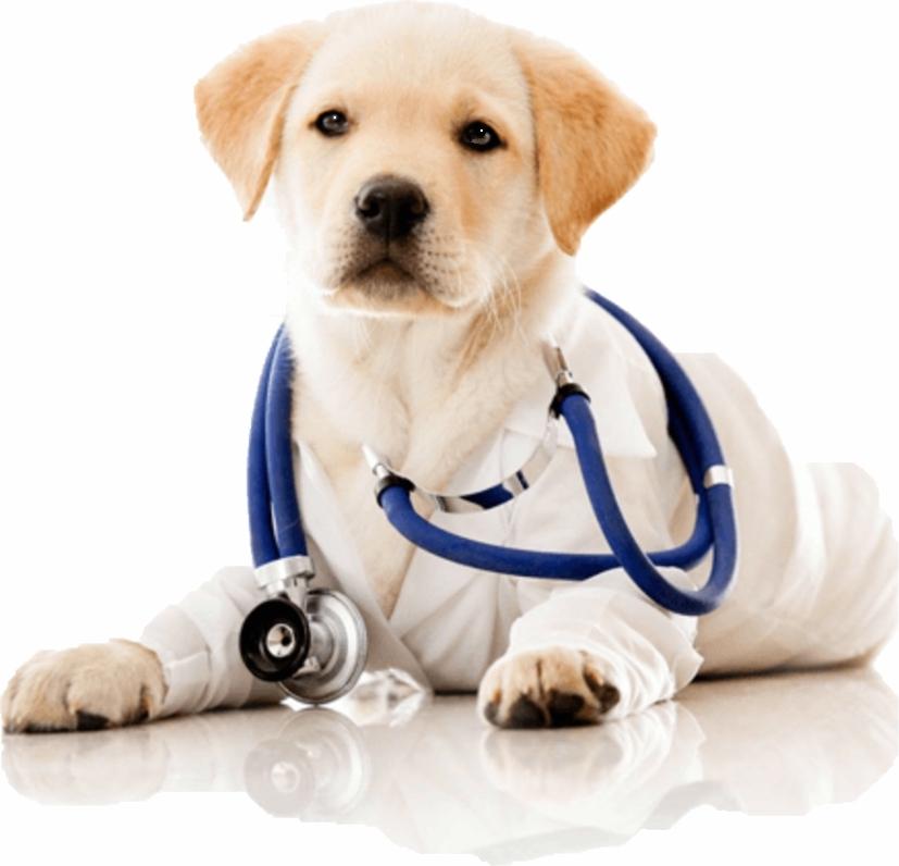 Section Vétérinaire