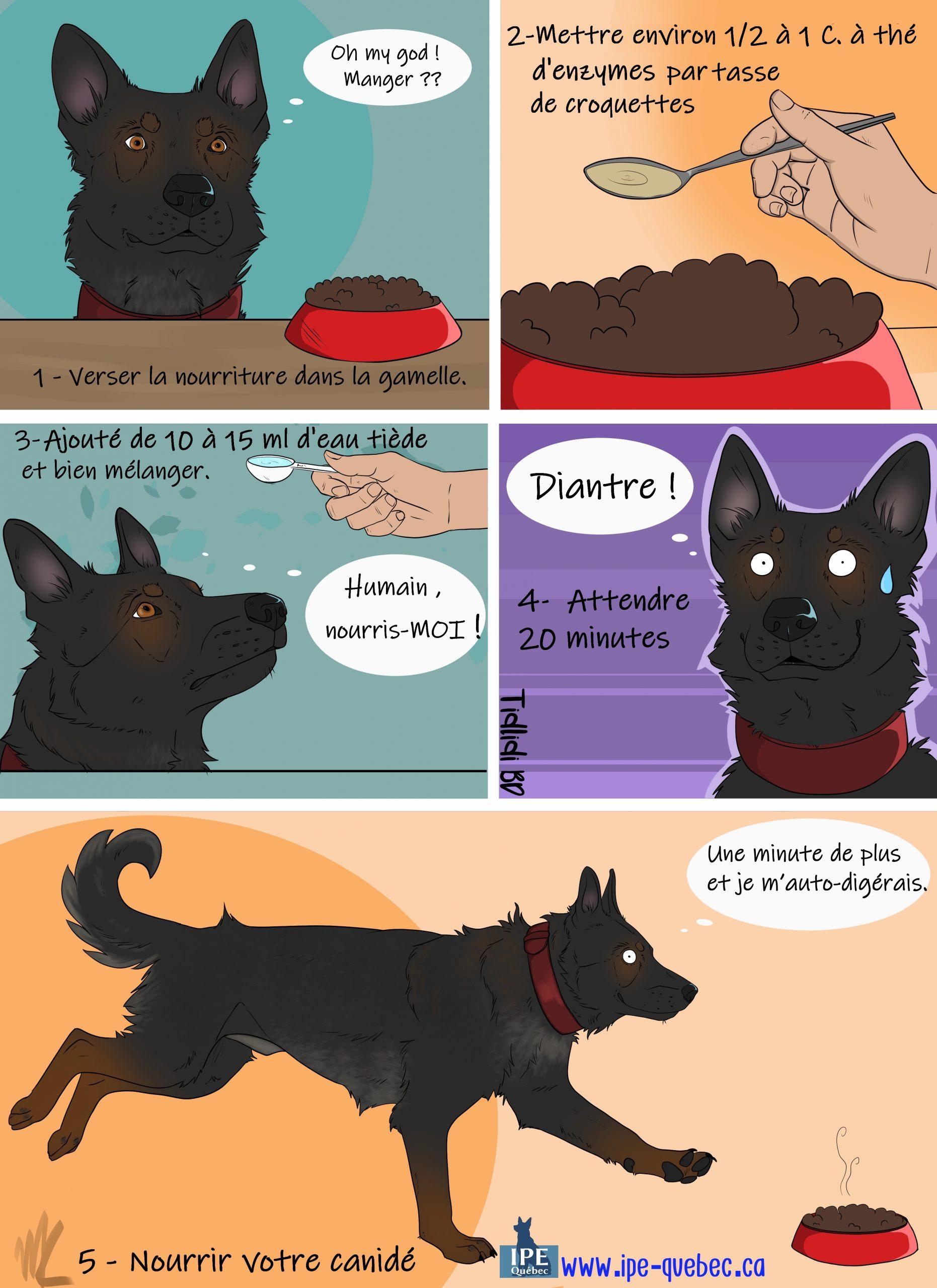 Comment nourrite in chien IPE